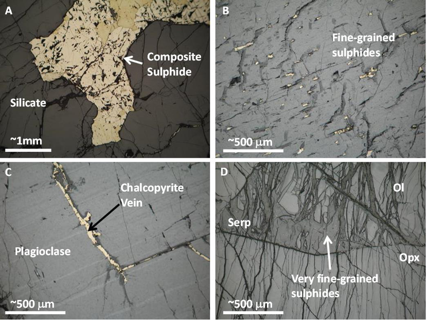 Sulphide textures. a. composite sulphide about 2mm across. b. Fine grained sulphides locked in an orthopyroxene megacryst. c. sulphide vein within plagioclase grain. d. Very fine grained sulphides enclosed in serpentine (Adapted from Brough et al., 2010).